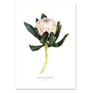 Plakát Leo La Douce King Protea, 21x29,7cm