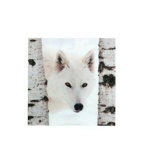 Nástěnná dekorace J-Line Wolf, 110x110cm