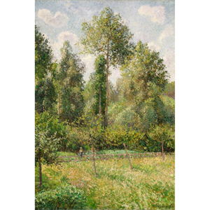 Reprodukce obrazu Camille Pissarro - Poplars Éragny, 60x80cm
